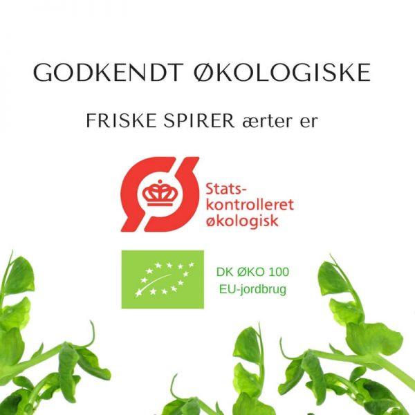 Oekologiske aerteskud aerter certificerede spirefroe fra FRISKE SPIRER