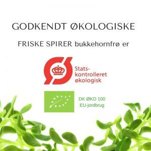 Bukkehorn økologiske spirefrø certificerede FRISKE SPIRER