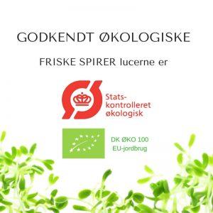 Oekologiske lucerne certificerede spirefroe fra FRISKE SPIRER