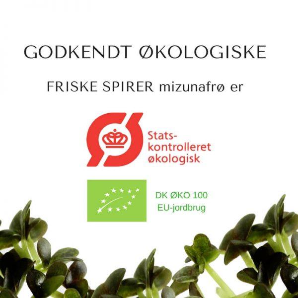 Oekologiske mizuna certificerede spirefroe fra FRISKE SPIRER