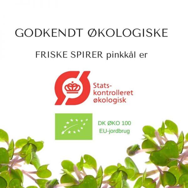 Oekologiske pinkkaal certificerede spirefroe fra FRISKE SPIRER