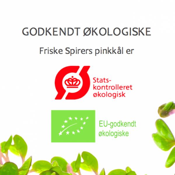Oekologiske pinkkaalfroe certificerede FRISKE SPIRER