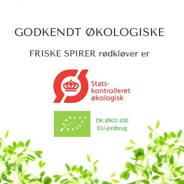 Oekologiske roedkloever certificerede spirefroe fra FRISKE SPIRER