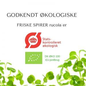 Oekologiske rucola certificerede spirefroe fra FRISKE SPIRER