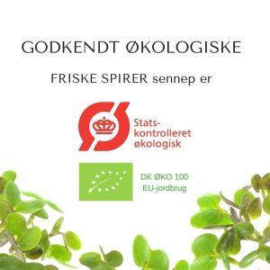 Oekologiske sennep certificerede spirefroe fra FRISKE SPIRER