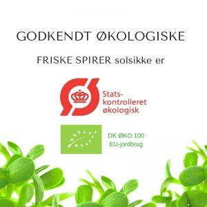 Oekologiske solsikke certificerede spirefroe fra FRISKE SPIRER