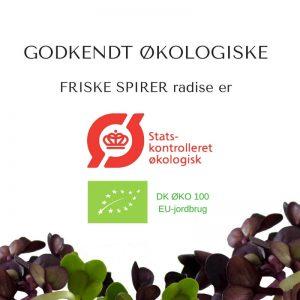 Oekologiske violetradise certificerede spirefroe fra FRISKE SPIRER
