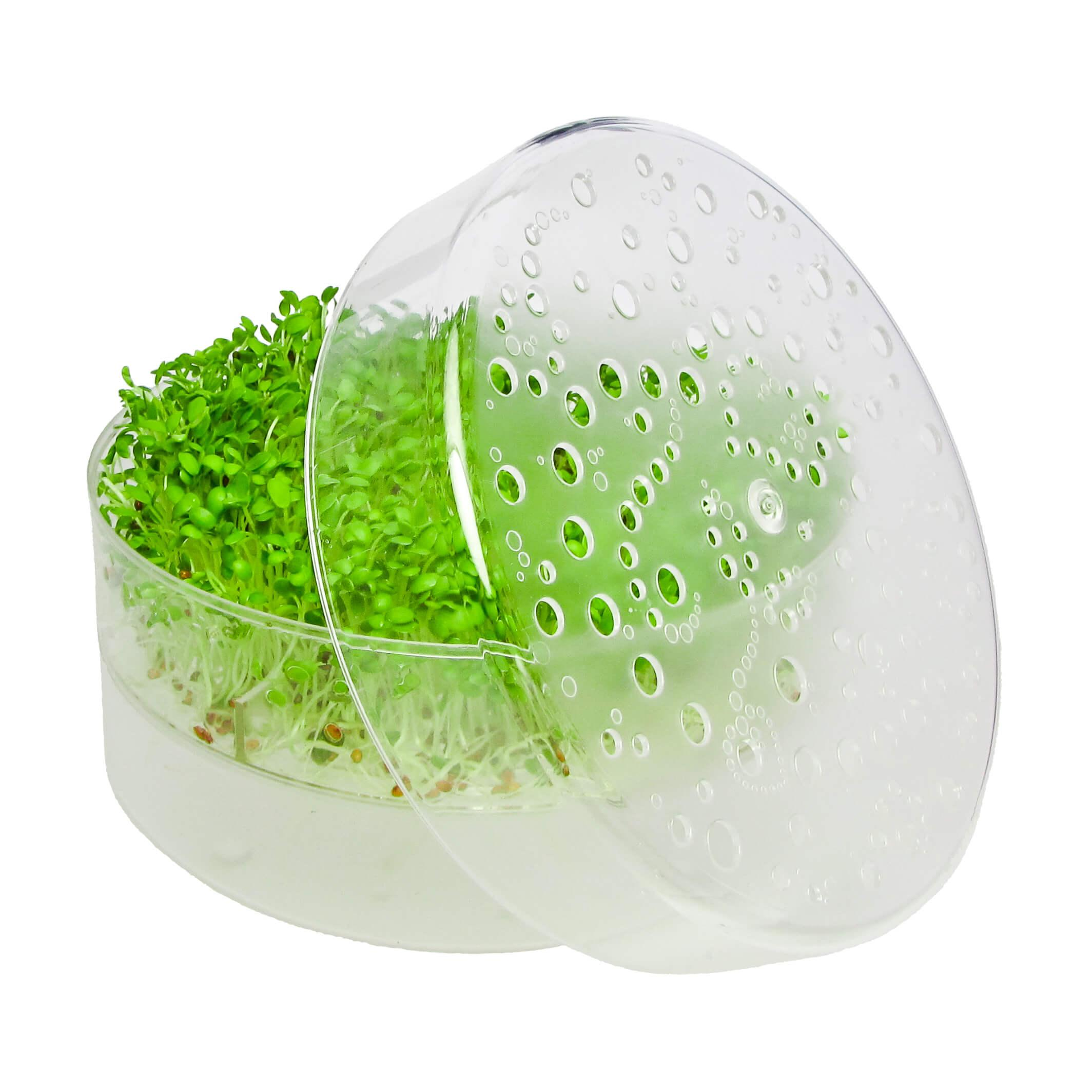 Spireperle med 1 froebakke transparent FRISKE SPIRER