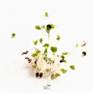 Oekologiske Broccolispirer 5 dage FRISKE SPIRER