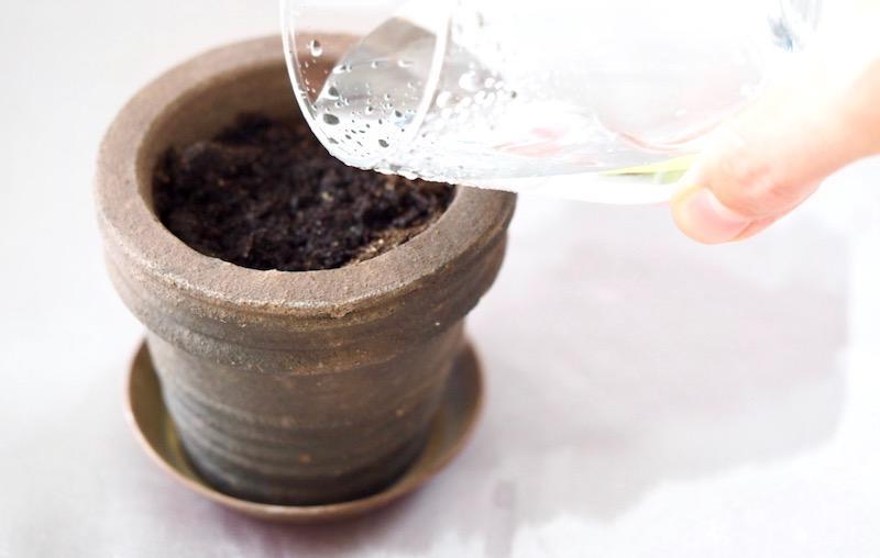 Vand dine aerter til oekologiske aerteskud FRISKE SPIRER