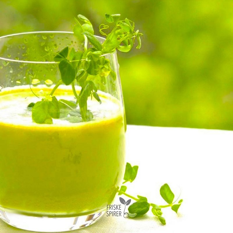 Groen juice med spirer og aerteskud FRISKE SPIRER