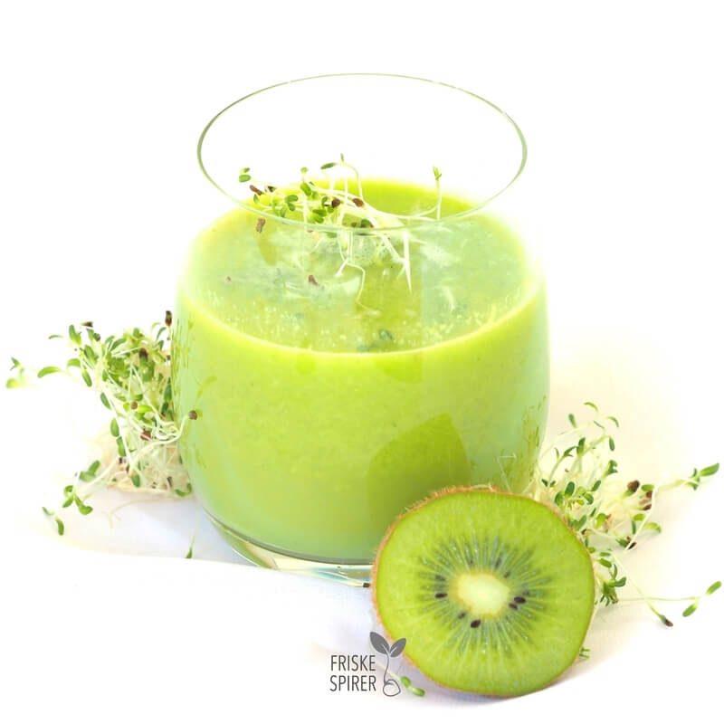 Vitaminrig juice med lucernespirer FRISKE SPIRER