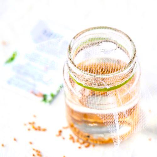 Spireguide til lille spireglas trin 2 FRISKE SPIRER