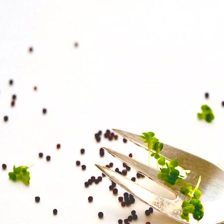 Broccolispirer FRISKE SPIRER