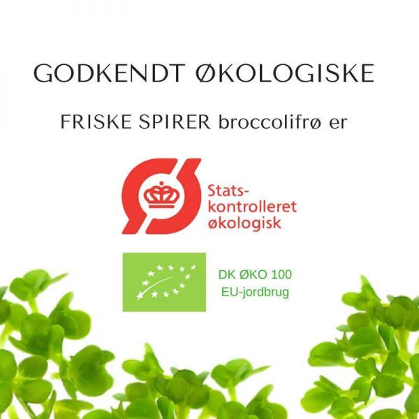 Oekologiske broccoli certificerede spirefroe fra FRISKE SPIRER