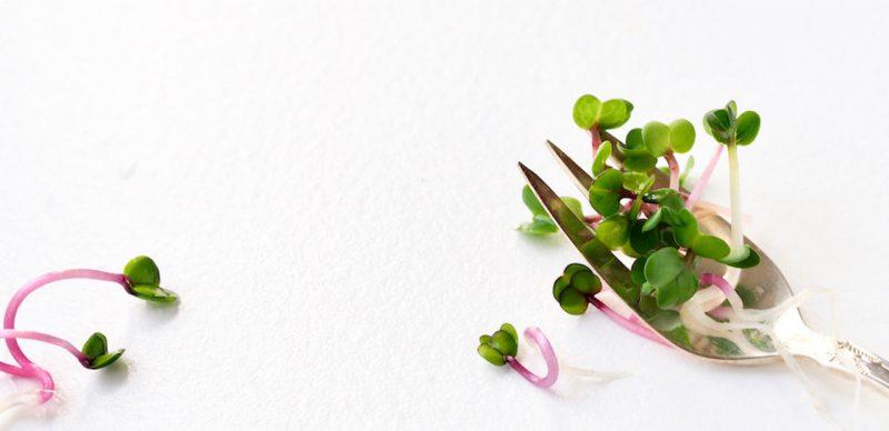 7 tips til spirer i maden FRISKE SPIRER