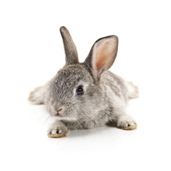 spirer til din kanin