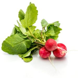 friske rosa radiser af oekologiske havefroe