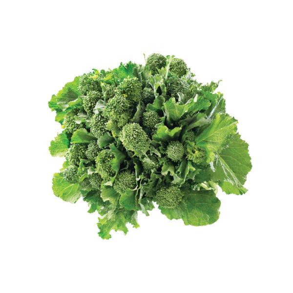 oekologiske havefroe broccoli rapini
