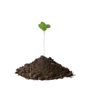 oekologiske havefroe til broccoli