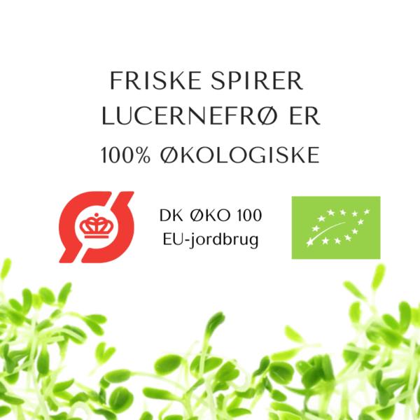 certificeret okologiske lucernefroe