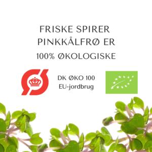 certificeret oekologiske pinkkaalfroe