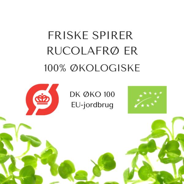 certificeret okologiske rucolafroe