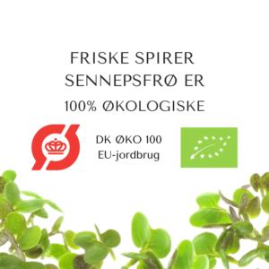 certificeret okologiske sennepsfroe