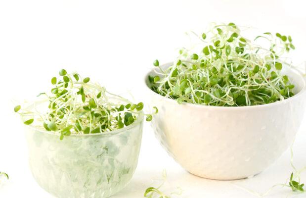dyrk selv groen dyremad med friske spirer