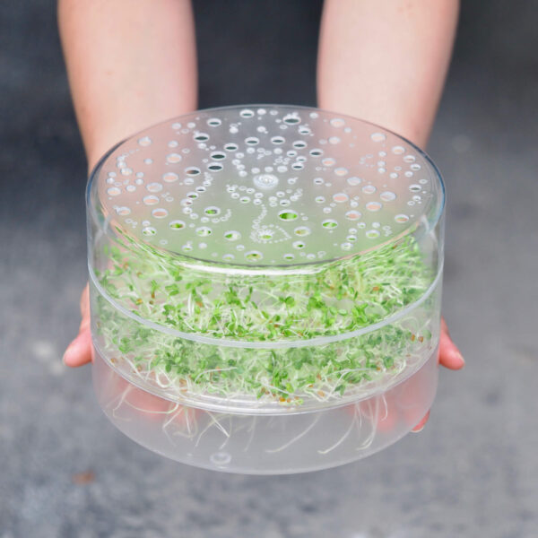 gennemsigtig spirebakke spireperle 1 froebakke