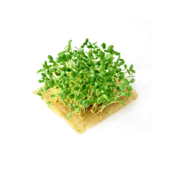 hampmaatte til spirer og microgreens